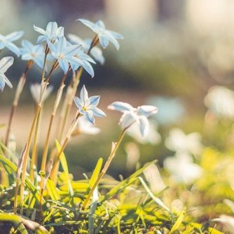 spring-offer-at-pullman-zamzam-madina